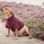 Fotógrafa faz ensaio gestante de cadela resgatada